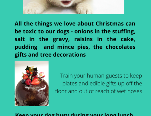 Keep your pets safe and happy this Christmas