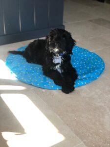 Millie Puppy